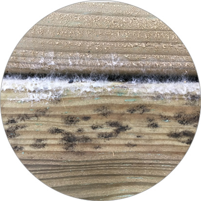 schimmelvlekken geïmpregneerd hout